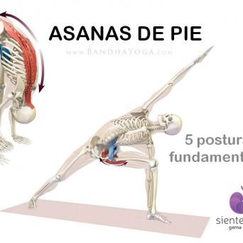 Yoga: 5 Asanas de pie fundamentales