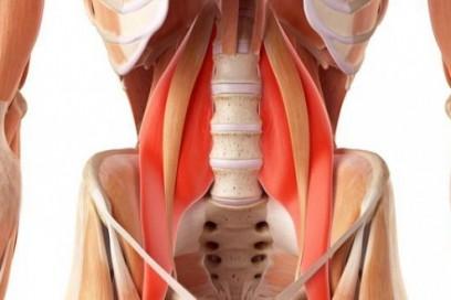 Hatha Yoga y músculo Psoas